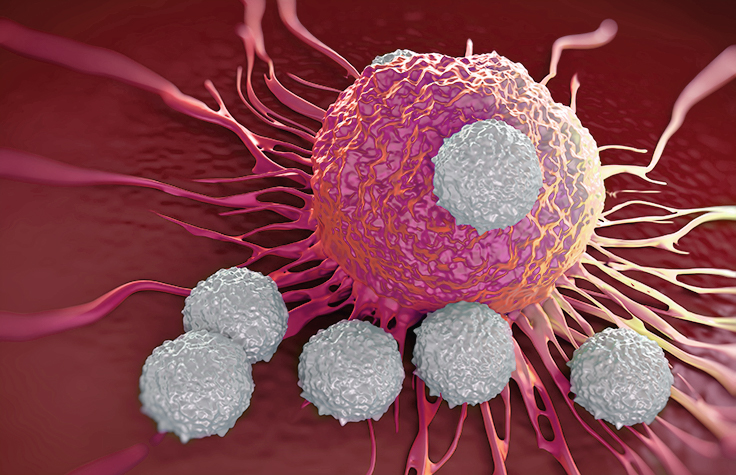 Cancer cells and T cells in immunotherapy