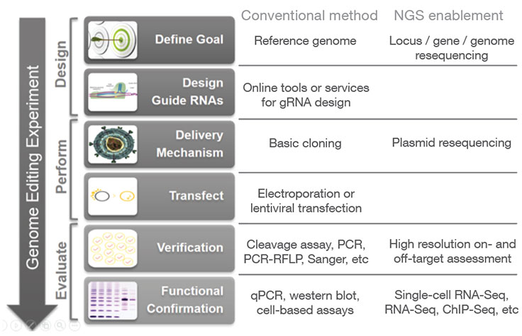 How NGS Fits into a CRISPR Genome Editing Workflow